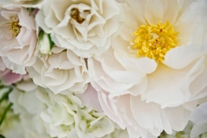botanical_gardens_spring_wedding_11